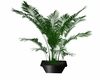 Black potted plant