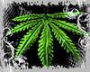 FN Weed Piercing