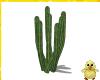 !! Day Cactus 2