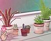 e classroom plants