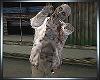 Ani Filthy Zombie B