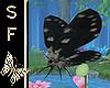 SF~ Fairy's Moth