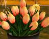 #Y Tulip 4 Fall