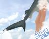 Sharkie Tail