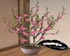 Sakura pink floor plant