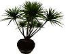 *MM* plant2