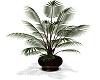 *MM* plant 1