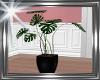 ! plant