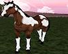 Wild Mustang 2