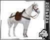 PET HORSE + RIDING