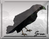 Shoulder Crow Left