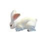 Interactive Bunny Rabbit