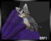 0|Shoulder Kitten