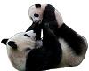 TF* Panda Mom & Baby