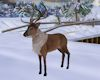 'Christmas Reindeer