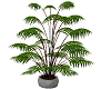 POTTED FERN WHITE POT