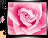 !   Pink Rose Hair