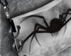 🔻 Spider |Purse|