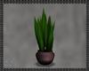 Mirage House Plant