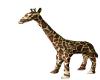 {E} Giraffe on Trains
