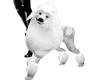 PET Adult Poodle - WHITE