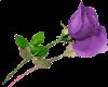 sticker_13742597_41268856