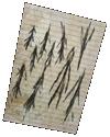 sticker_12188402_46351294